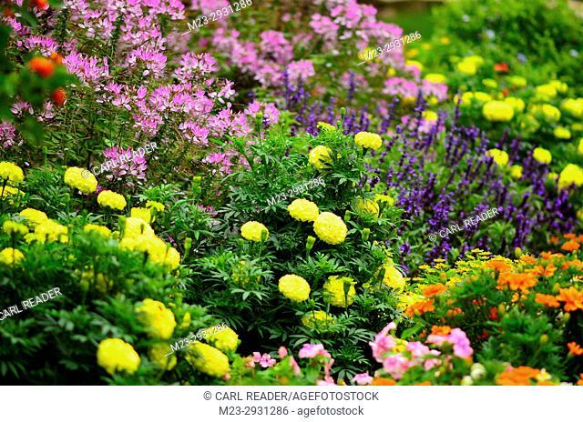 A riot of color in a garden in soft-focus, Pennsylvania, USA