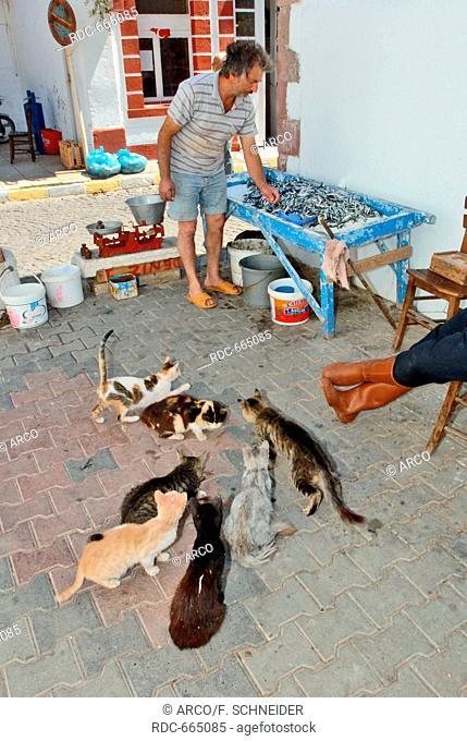 cats around sales table with fish, Ayvalik, Cunda, Balikesir, Turkey, Asia / Ayvalik