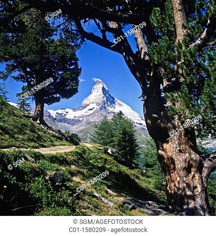 Hiking trail with Arolla pine trees and Matterhorn, Zermatt, canton Valais, Switzerland