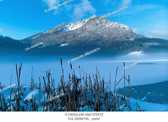 Winter landscape with mist over Spitzingsee, Bavaria, Germany