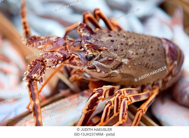 lobster on fishmarket
