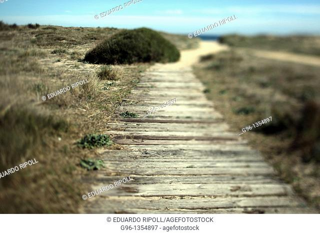 Path of wood in a dune on the beach