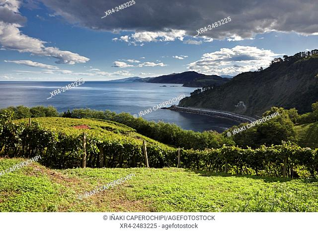 Txakoli vineyards, Getaria, Gipuzkoa, Basque Country, Spain