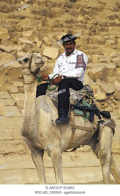 Police guard on Dromedary Dashur Egypt Camelus dromedarius Dashour One-humped Camel policeman