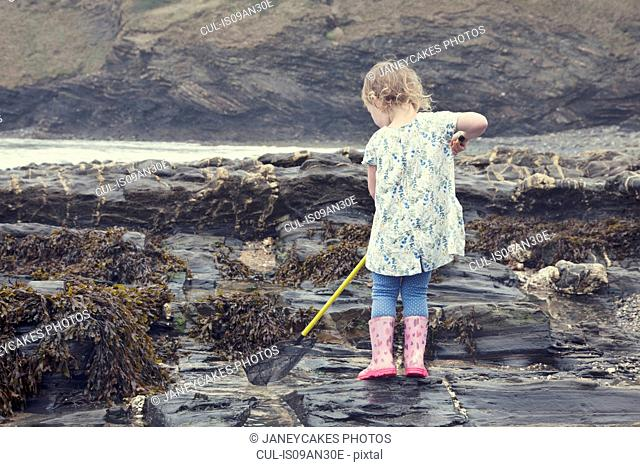 Female toddler fishing in rock pools on beach, Crackington Haven, Cornwall, UK