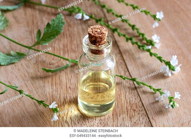 A bottle of common vervain essential oil with fresh verbena officinalis flowers on a table