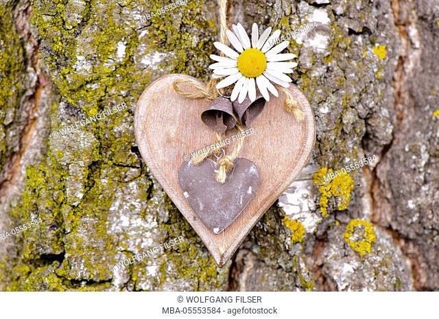 Carved heart at the tree as an icon of the love