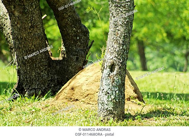 a bothanical park vegetation tree