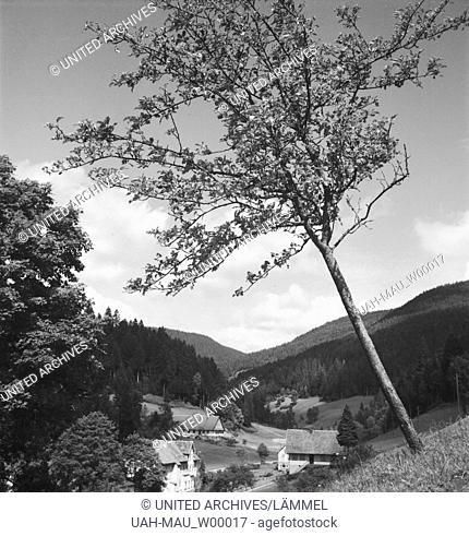 Sommer im Schwarzwald, Deutschland 1930er Jahre. Summer in the Black Forrest, Germany 1930s
