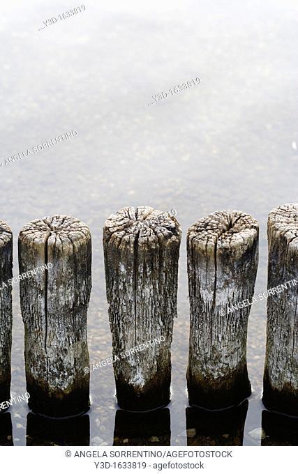 Wood barrier on water's edge, winter