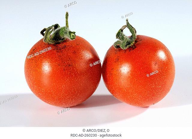 Tomatoes  'Angora Super Sweet' Solanum lycopersicum