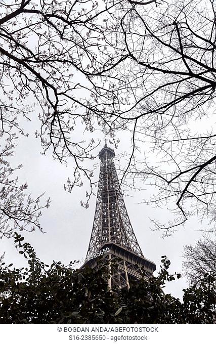 Paris, France - Eiffel Tour seen through winter bare tree branches