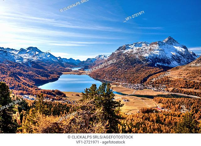 Views over lakes Sils and Silvaplana surrounded by yellowed larches in autumn. Sankt Moritz. Engadine Grisons Switzerland. Europe