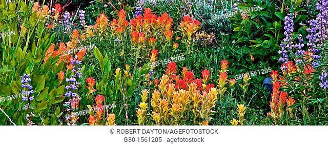 Summer wildflowers in the Eldorado National Forest, California