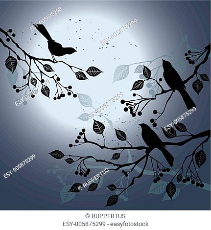 Birds on the branch during summer's night