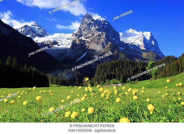 Alp, alps, flora, view, mountain, mountain panorama, mountains, mountain flora, mountain spring, mountain massif, mountain panorama, Bern, Bernese Oberland