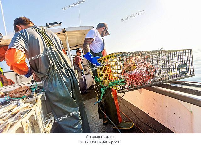 Fishermen preparing lobster traps