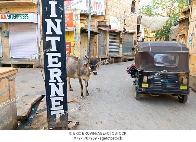 A cow stands behind a sign reading, 'INTERNET,' as a tuktuk drives by  Jaisalmer, India