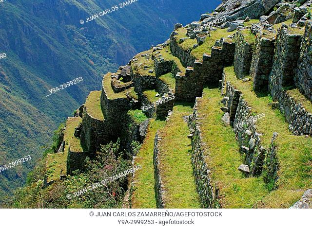 Andenes, agricultural fields, Machu Picchu,Los Andes and Urubamba or Vilcanota river canyon, Llaqtapata inca city, World Heritage, XVth century,Aguas Calientes