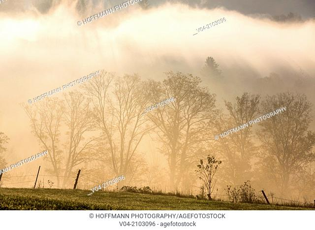 Trees in the morning mist, Vermont, USA