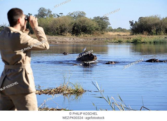 Africa, Botswana, Okavango Delta, Man viewing hippos through binoculars, rear view