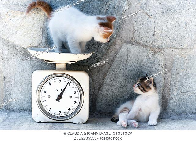 A kitten is standing on a kitchen scale