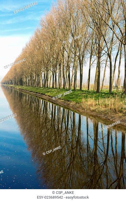 Reflected trees in rural Flanders