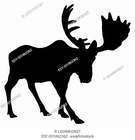 Beautiful silhouette of an adult moose with big antlers. Isolated on white