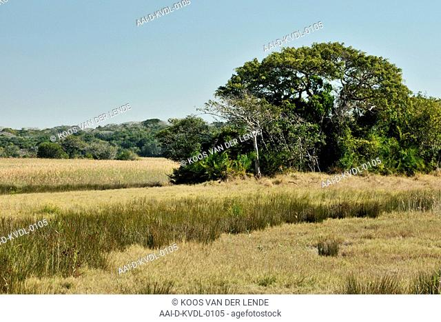 Marsh area, Maputa Special Reserve, Mozambique