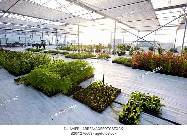 Greenhouse, Hernani, Guipuzcoa, Basque Country, Spain