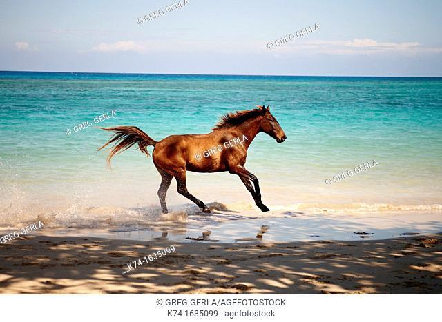 Horse in the ocean on a Caribbean beach