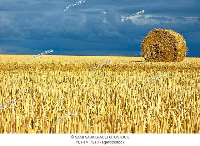 Hay bales in harvested corn field, Normandy, France