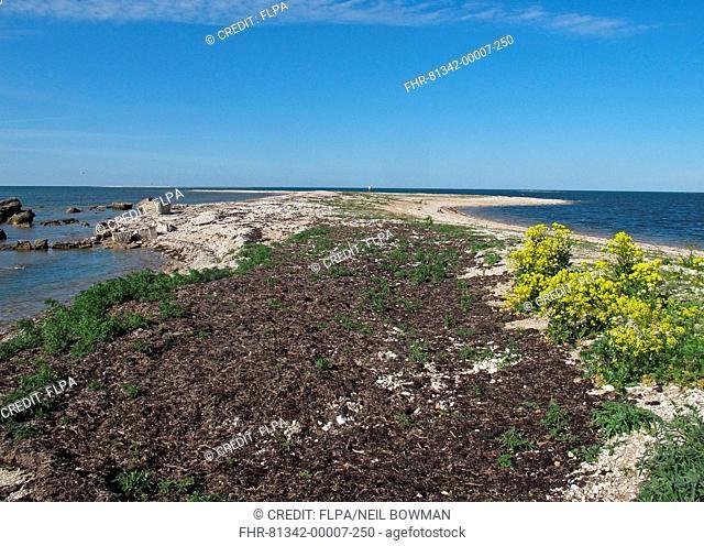View along coastal peninsula, Sorve Peninsula, Saaremaa Island, Saare County, Estonia, June