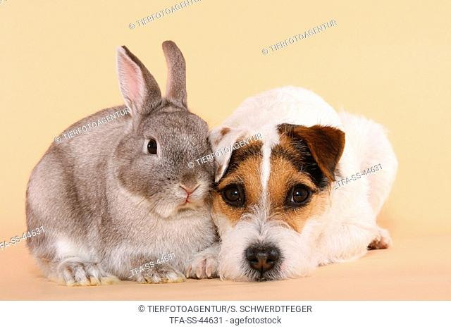 Parson Russell Terrier and dwarf rabbit