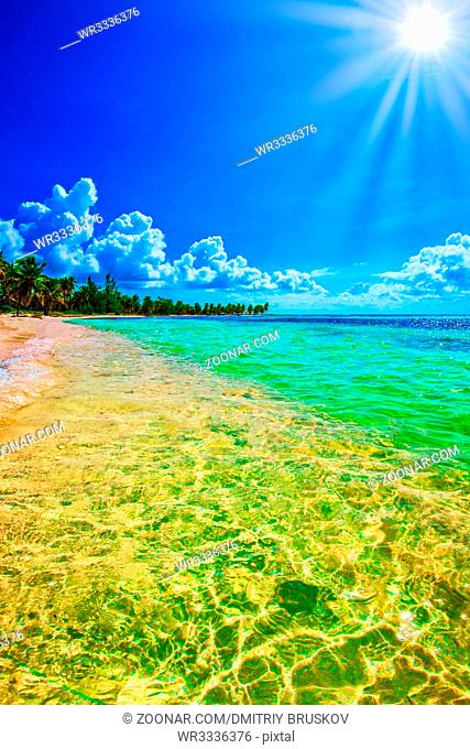 Paradise nature, sea on a tropical beach with green tree palm caribbean dominican