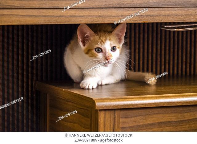 Cute kitten sitting indoors