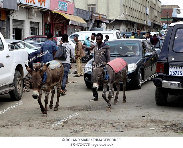 Two donkeys between the cars on bad road, Addis Ababa, Ethiopia