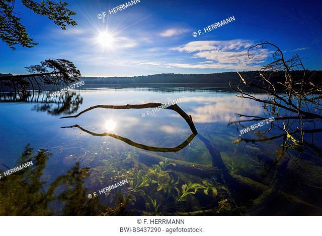 fallen tree lying in the lake Grosser Stechlinsee in morning light, Germany, Brandenburg, Grosser Stechlinsee