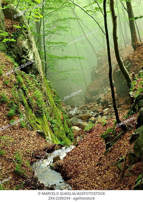 Sot de l'Obi stream. Montseny Natural Park. Barcelona province, Catalonia, Spain