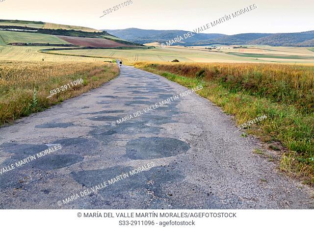 Road to Morales. Logroño. La Rioja. Spain. Europe