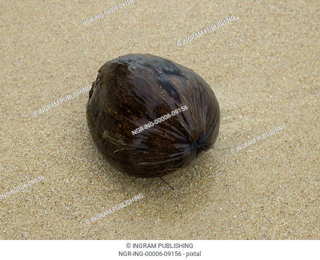 Close-up of wet coconut on beach, Koh Samui, Surat Thani Province, Thailand