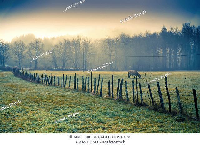 Pasture and trees. Bitoriano, Zuia. Zuya county. Alava, Basque Country, Spain, Europe