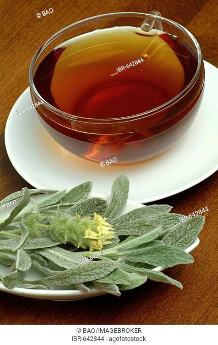 Ironwort or Mountain Tea (Sideritis syriaca) tea, herbal tea