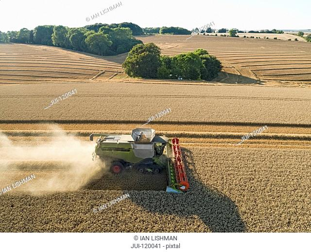 Harvest aerial combine harvester and summer wheat field farm crop
