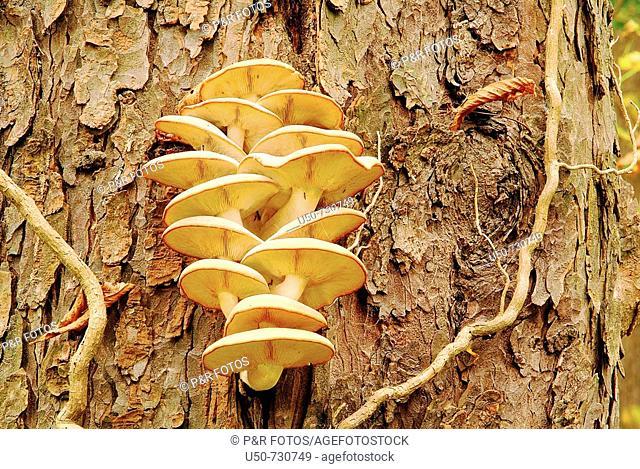 Mushrooms, Basidiomycota