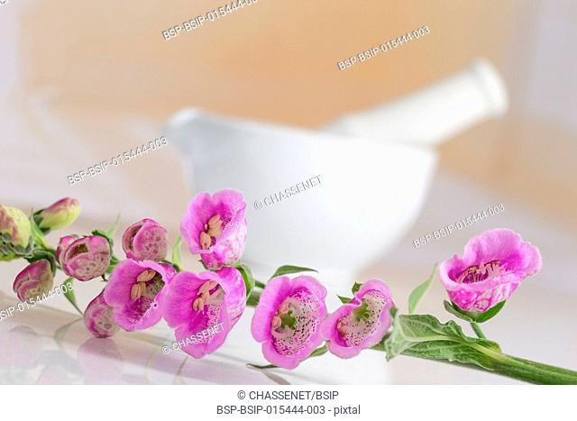 Digitalis Flowers with a ceramic mortar on background