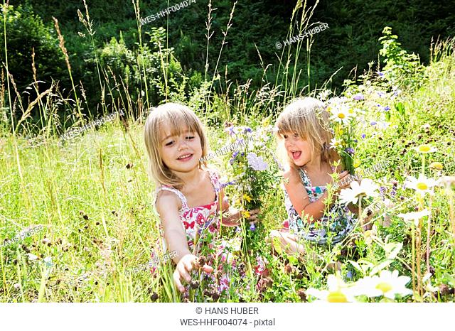 Austria, Salzburg County, Girls picking flowers in summer meadow