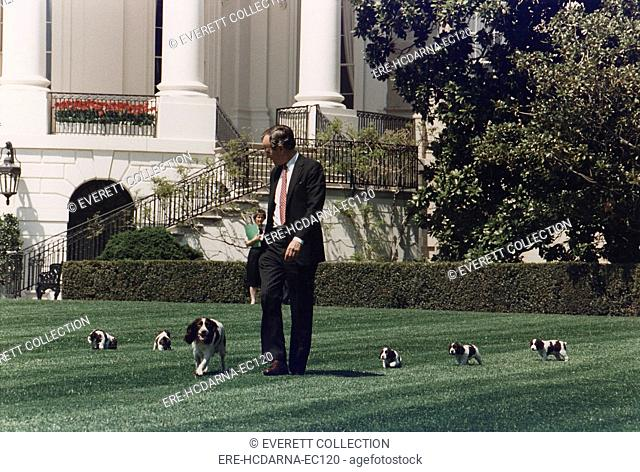 President George H.W. Bush (41) walks on the South Lawn of the White House, followed by Millie and her puppies. In 1989, Millie gave birth to a litter of six...