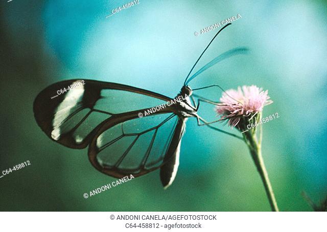 Butterfly. Monteverde, Costa Rica