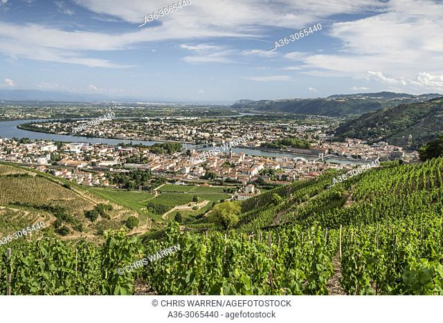 Across the vineyards at Tain l'hermitage Drôme Auvergne-Rhône-Alpes France